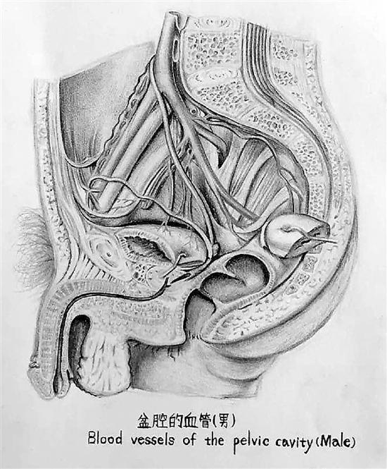 人体解剖学绘图比赛参赛作品.-医科大学女大学生的课堂笔记 线条清
